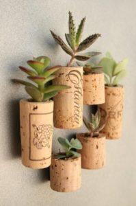 succulenta design