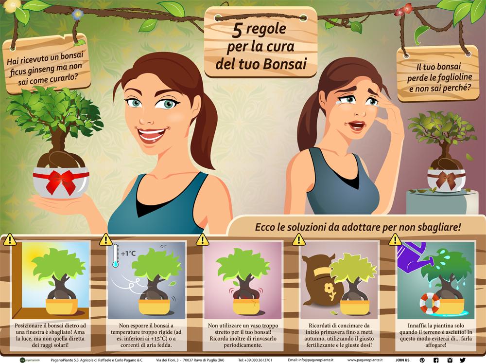 infografica bonsai ficus