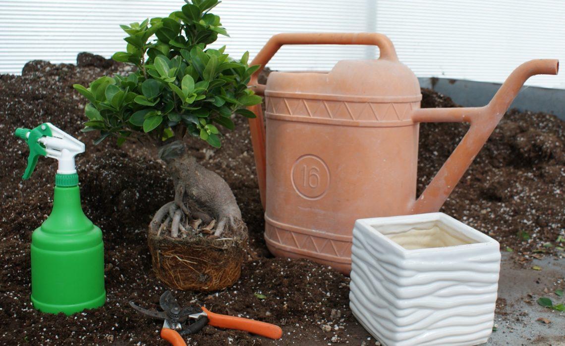 piante secche in estate come evitare che le piante si ForPiante Secche Ornamentali