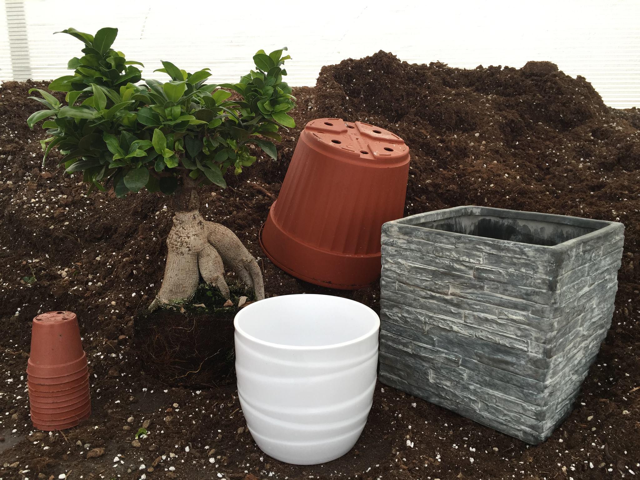Concimazione del bonsai