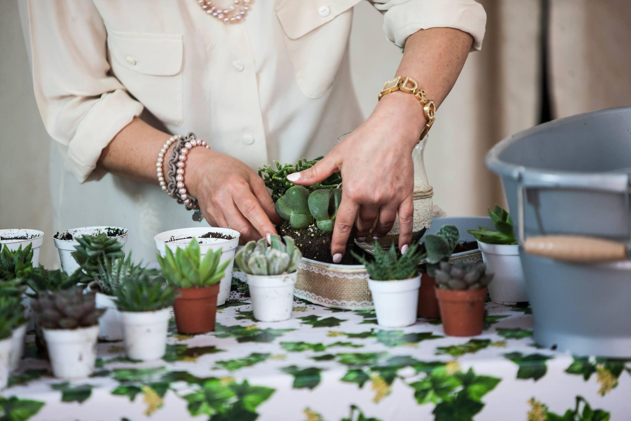 Centrotavola Con Piante Succulente Per Matrimoni Ed Eventi Speciali