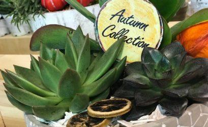 Composizioni di succulente
