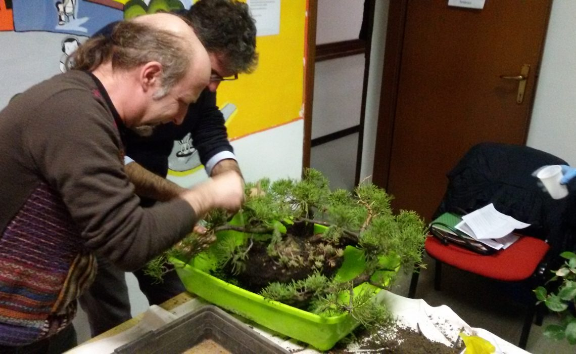Bonsai Ficus Curare Bonsai In Inverno Presidente Di Assobonsai