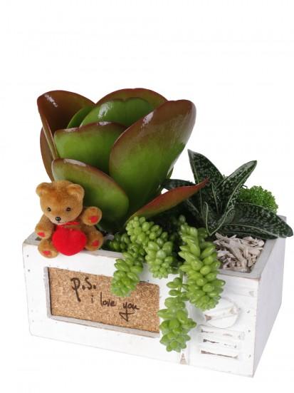 Idea regalo per san valentino composizioni di piante - Cerco piante da giardino in regalo ...