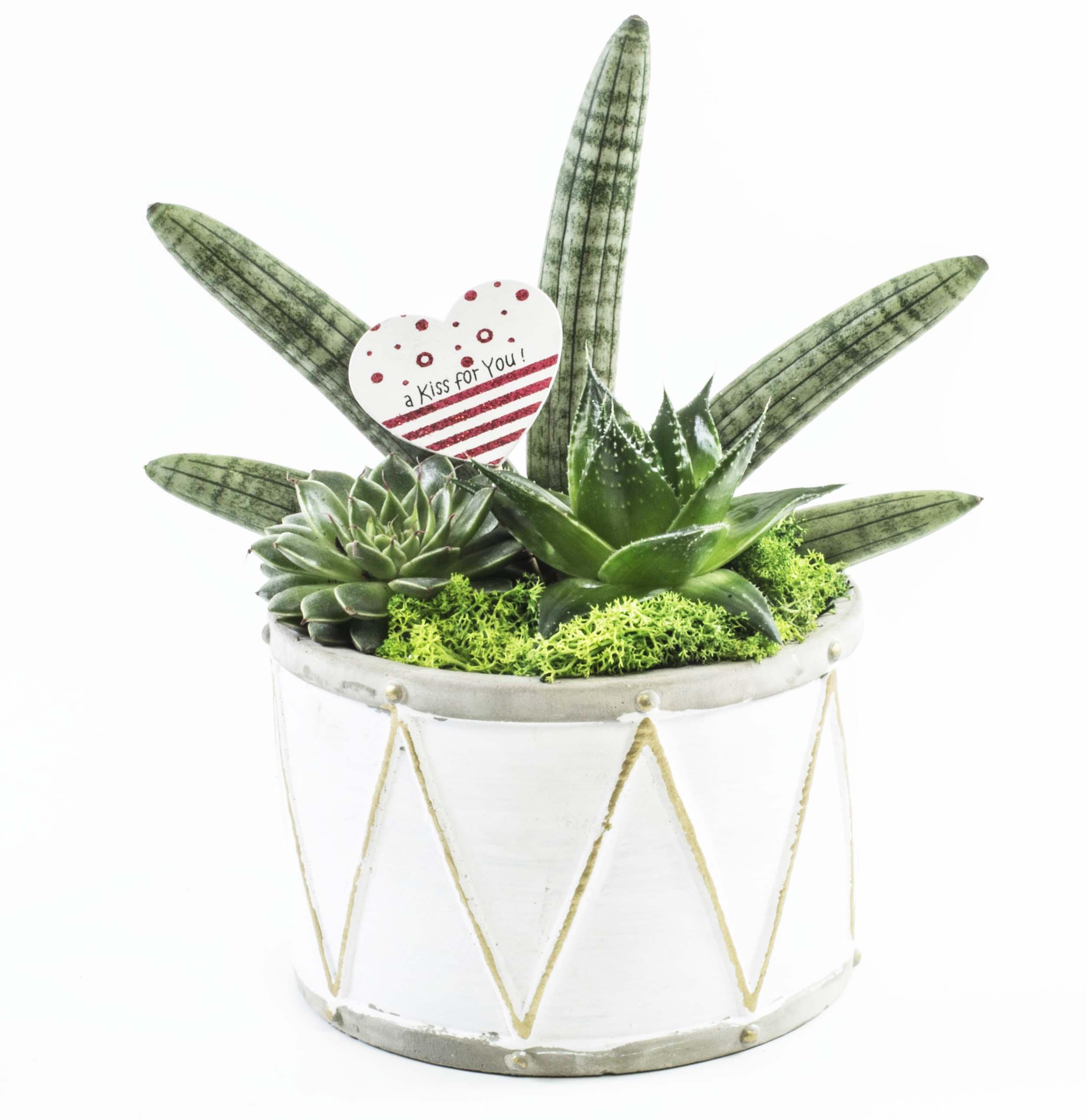 Idea regalo per san valentino composizioni di piante - Piante regalo ...