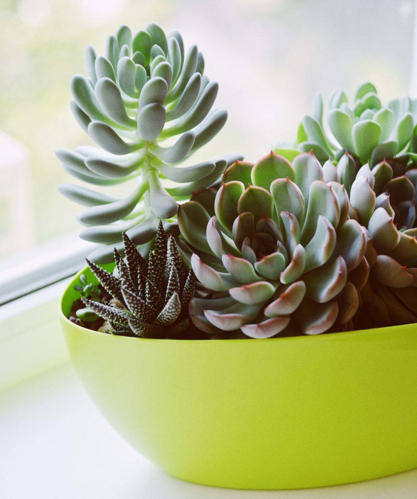 Piante succulente idee per arredare casa e giardiano con for Arredare casa con le piante