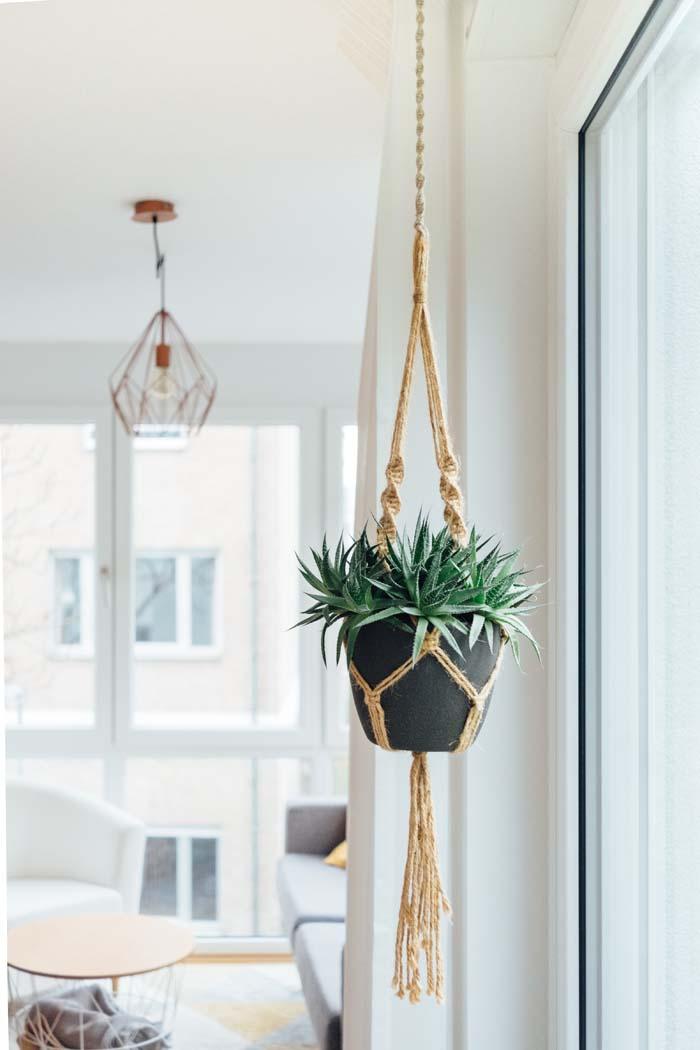 Piante succulente: idee per arredare casa e giardiano con le piante ...