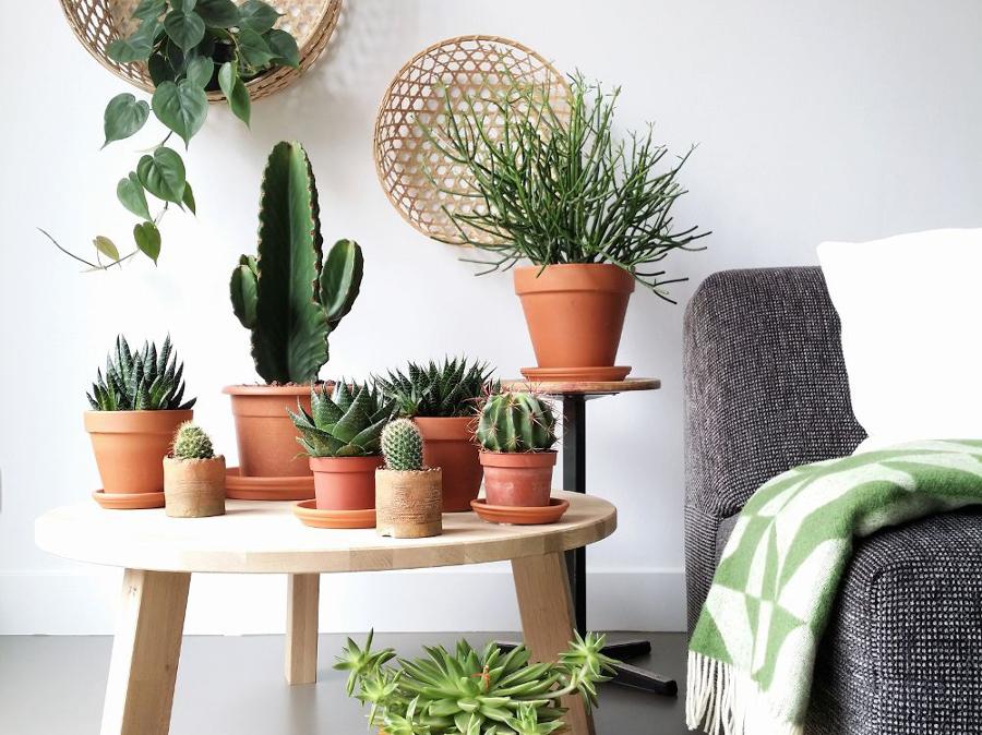 Composizione Piante Grasse Da Appartamento.Piante Grasse Da Appartamento Ecco Le Succulente Piu Belle